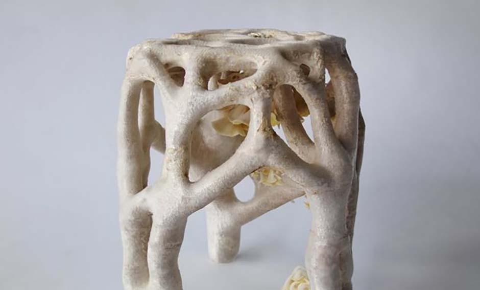 Erik_Klarenbeek_Veiled_Lady_Mycelium_Project_1