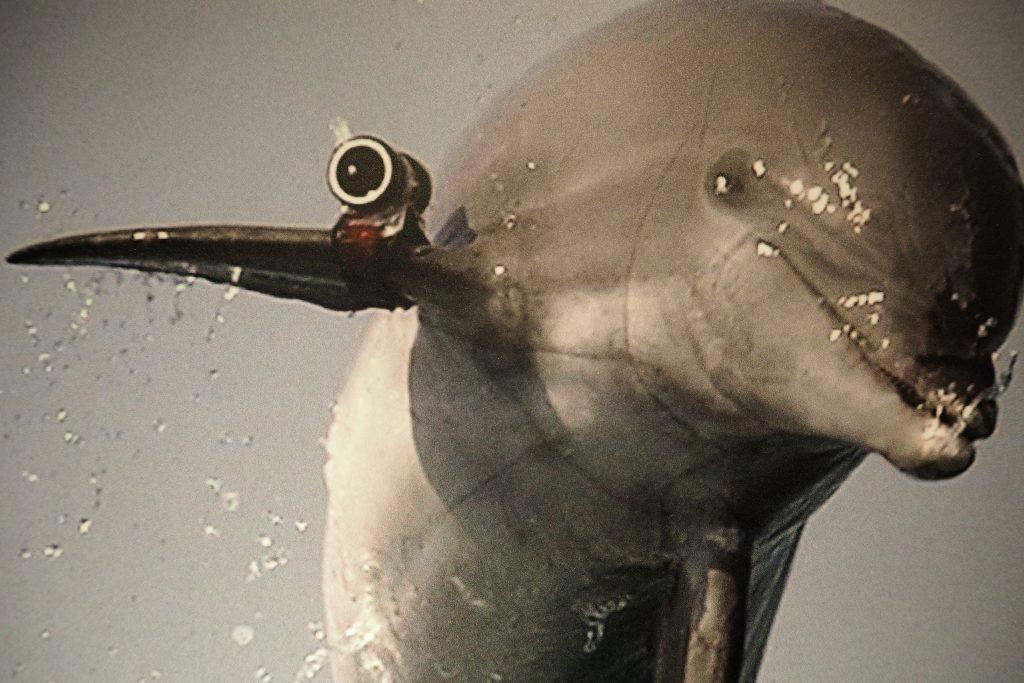 Dolfijnen brengen met een camera op een vin de onderwaterwereld in beeld Spy Museum - foto Wilma Lankhorst