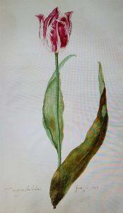 Museum in Bloei Tulpenboek-1640-1700-Judith-Leyster-1643-Frans-Hals-Museum-foto-wilma-Lankhorst