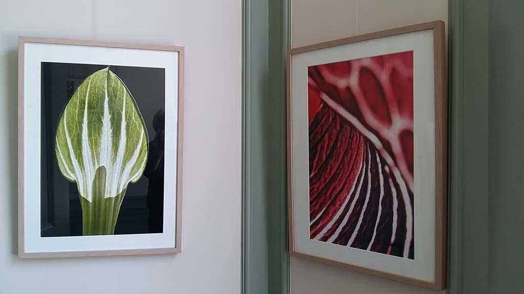 Buitenplaats-Beeckestijn-collectie-Arisaema-2-@PietvanLeeuwen-foto-Wilma-Lankhorst.