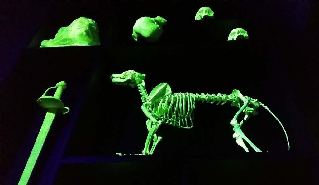 Museum_de_Lakenhal_Universiteitskamer-a-glow-in-the-dakt-Mark-Dion_-foto-Wilma_Lankhorst