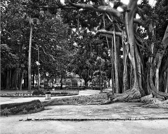 John_Riddy_Palermo_Piazza_Marina-2012-foto-collectie-De-Pont