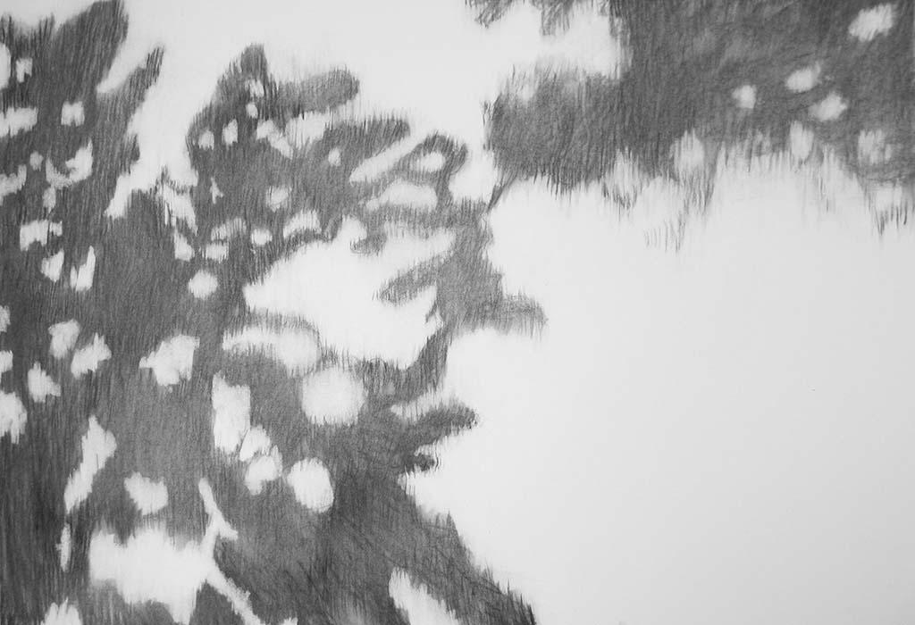 Marijke_van_Dijk_Shadowland - houtskool (2013)
