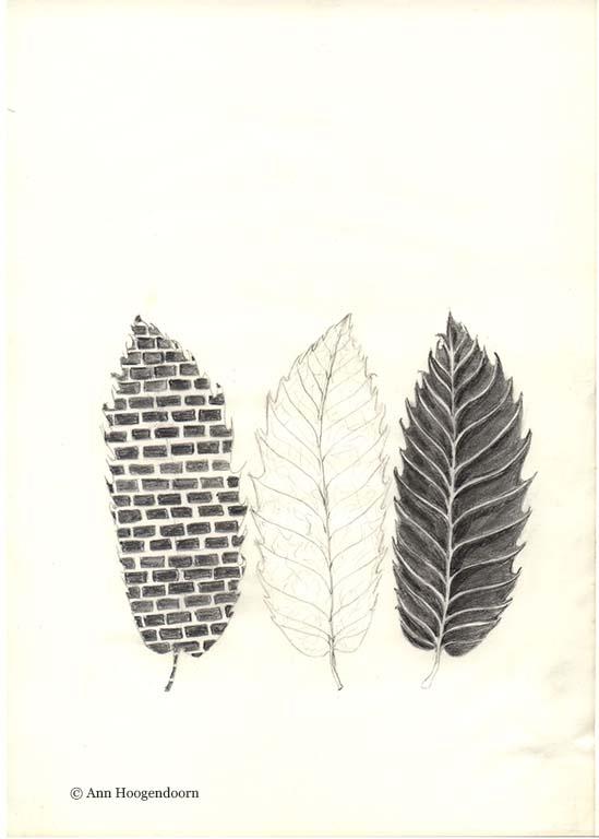 Ann Hoogendoorn  potlood tekening bladeren serie 2007 © Ann Hoogendoorn
